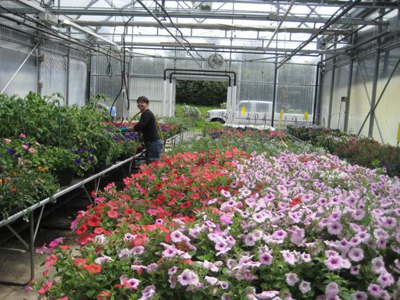 Photo of G.R. Paine Horitucultural Centre flowers being watered in green house