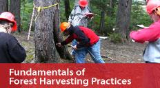 viu-fundamentals-forest-harvesting-practices-small