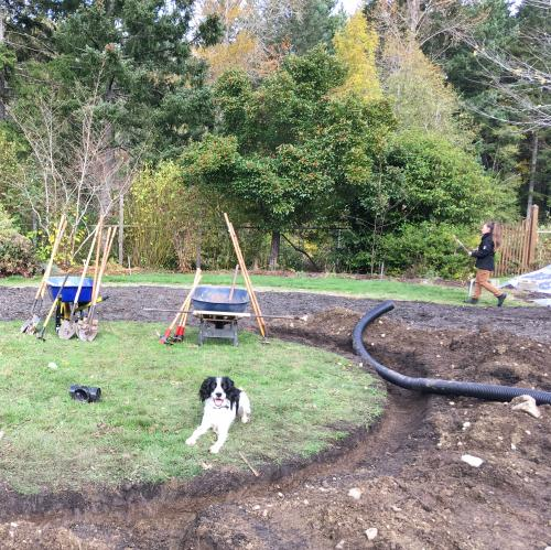 VIU Horticulture, Horticulture, Gardening, Meadow, DLF Pickseed Canada