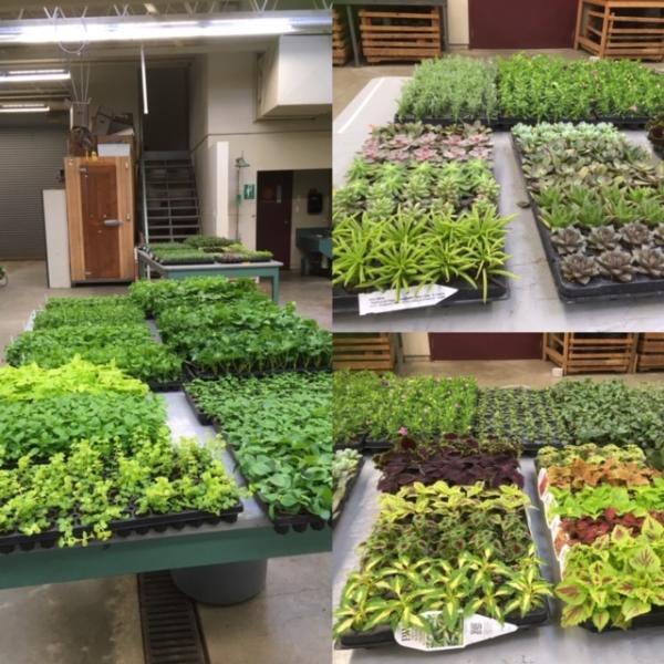 VIU Horticulture, Vancouver Island University, Horticulture, VIU, VIU Plant Shop