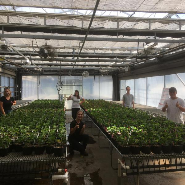 VIU Horticulture students growing poinsettias 2020