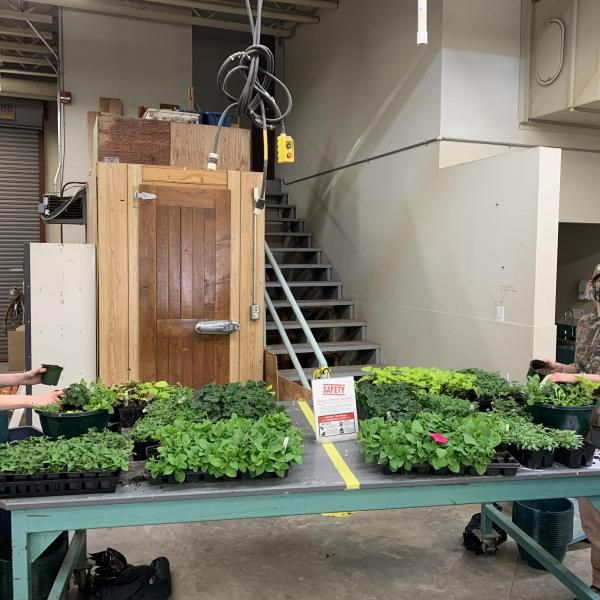 VIU Horticulture students potting annual plants for spring plant sale