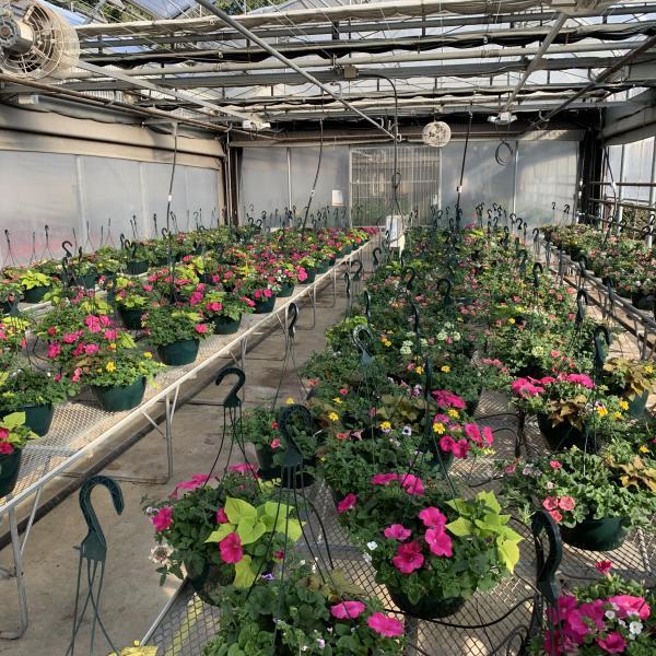 VIU Horticulture spring 2021 hanging basket crop